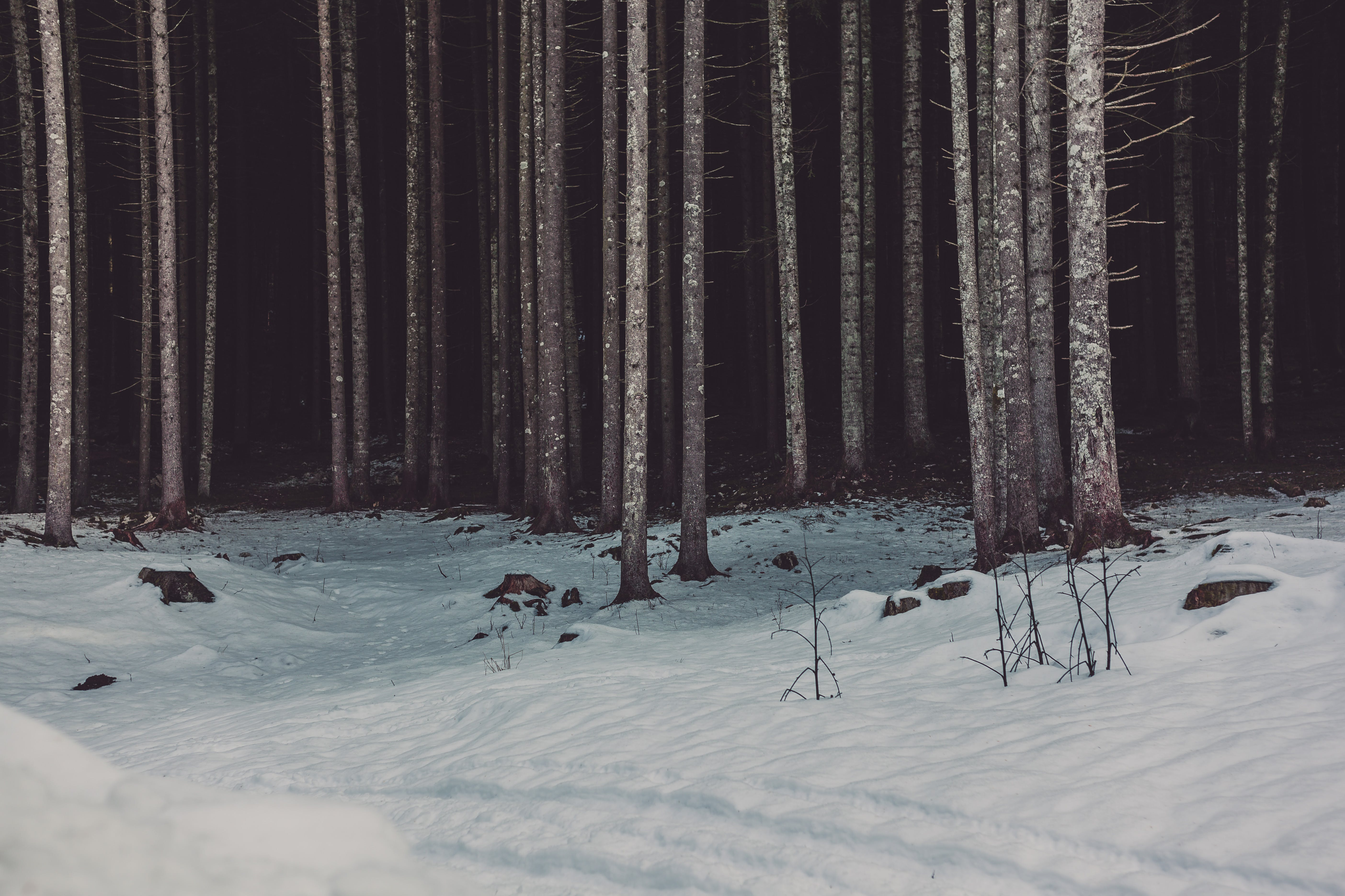Photo of Woods Near Snow
