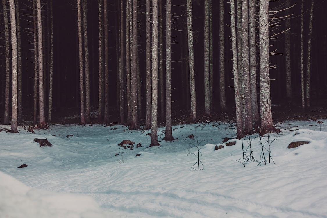 černé pozadí, kameny, kmeny stromů