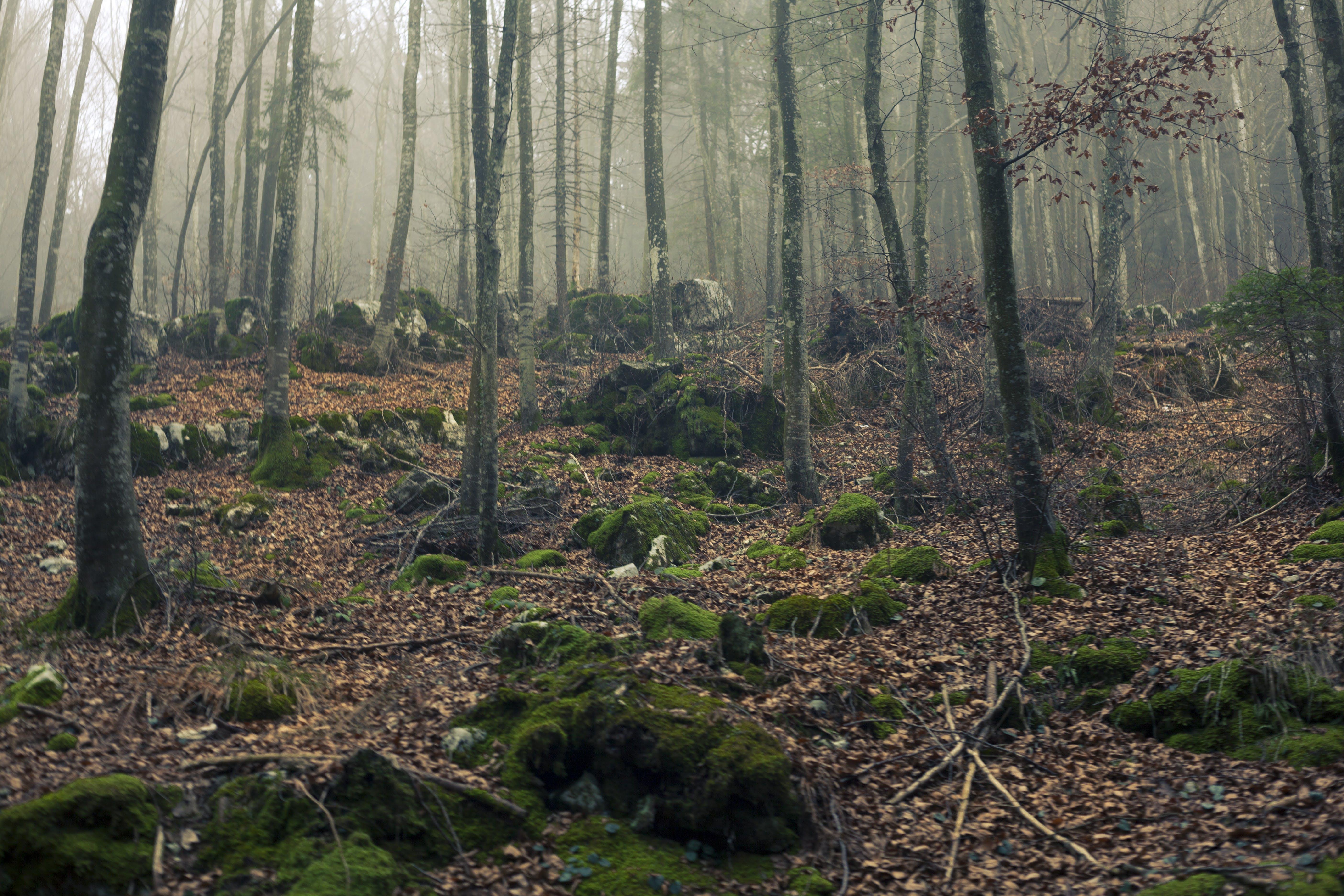 Бесплатное стоковое фото с веточки, гора, день, деревья