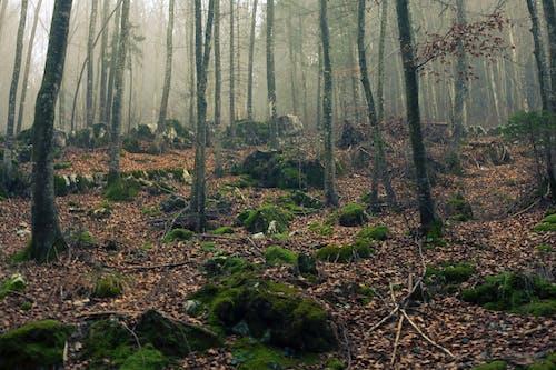 Fotobanka sbezplatnými fotkami na tému deň, denné svetlo, exteriéry, fotografia prírody
