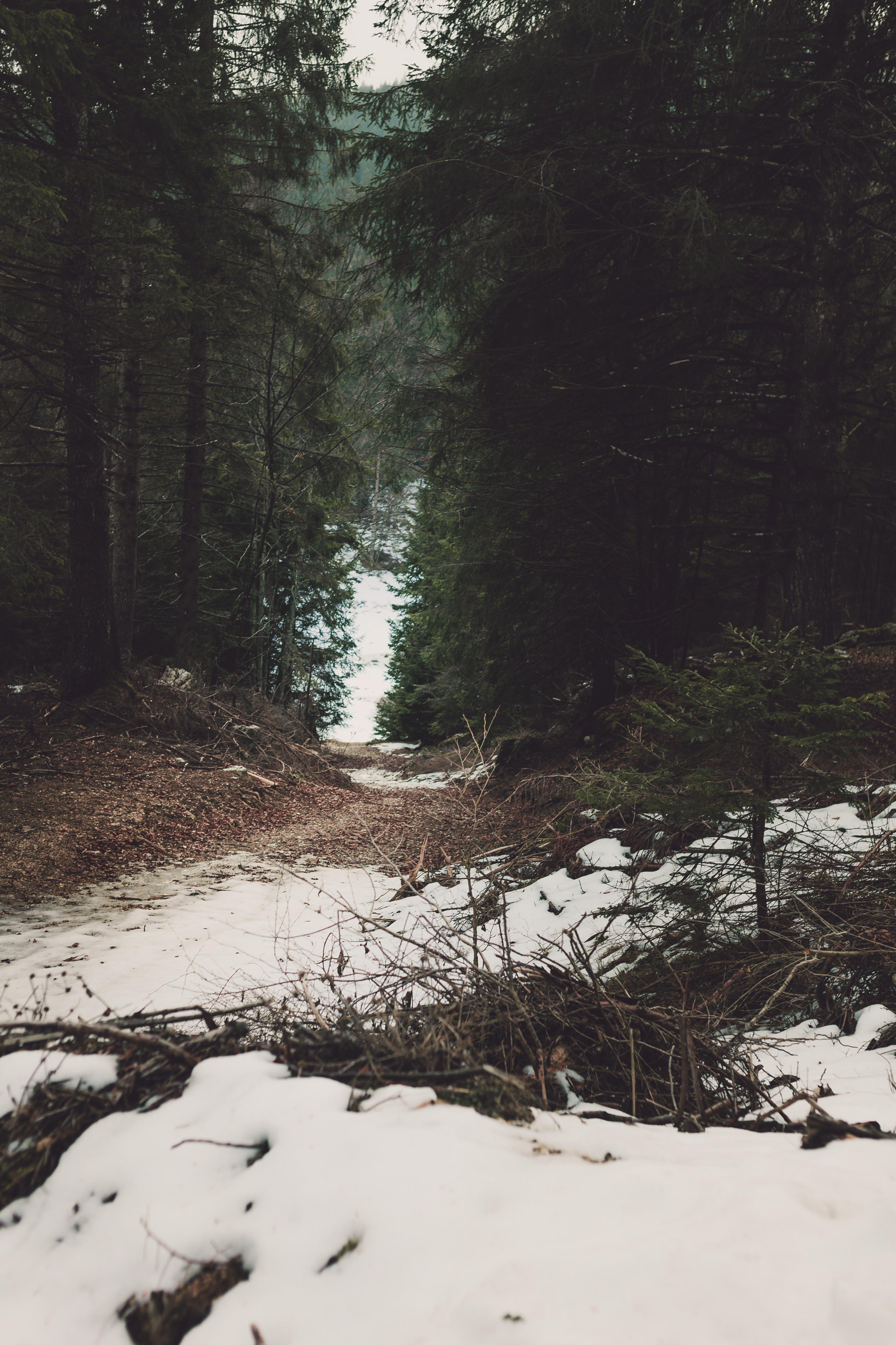 Gratis lagerfoto af dag, dagslys, forkølelse, grøn