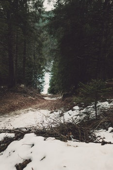 White Snow in Between Forest