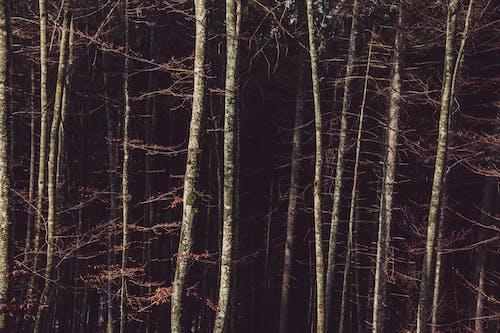 Fotobanka sbezplatnými fotkami na tému HD tapeta, idylický, krajina, les