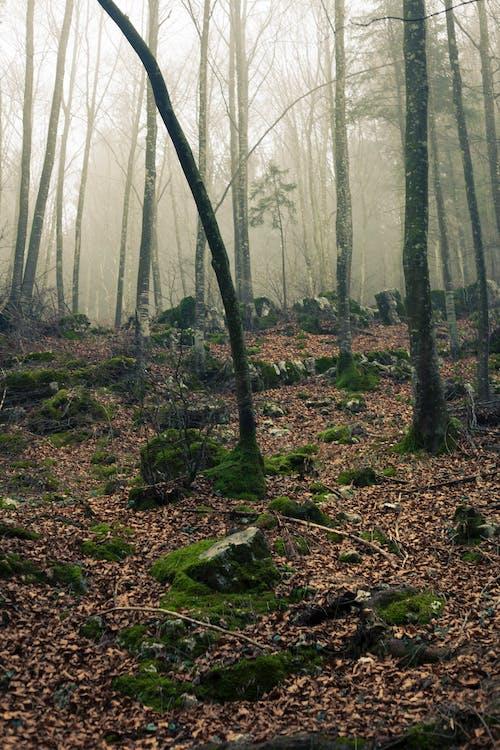 ağaçlar, büyüme, çevre