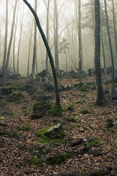 Foggy Forest With Stones Under Sunset
