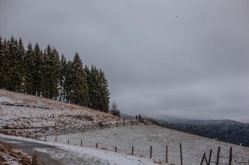 Imagine de stoc gratuită din anotimp, arbori, câmp, cer