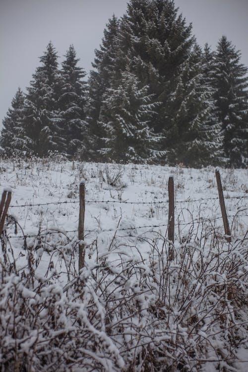Gratis stockfoto met besneeuwd, bevriezen, bevroren, bomen