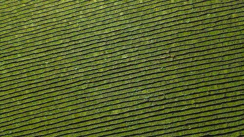 Základová fotografie zdarma na téma farma, hřiště, letecký snímek
