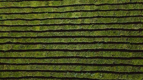 Základová fotografie zdarma na téma detail, farma, flóra