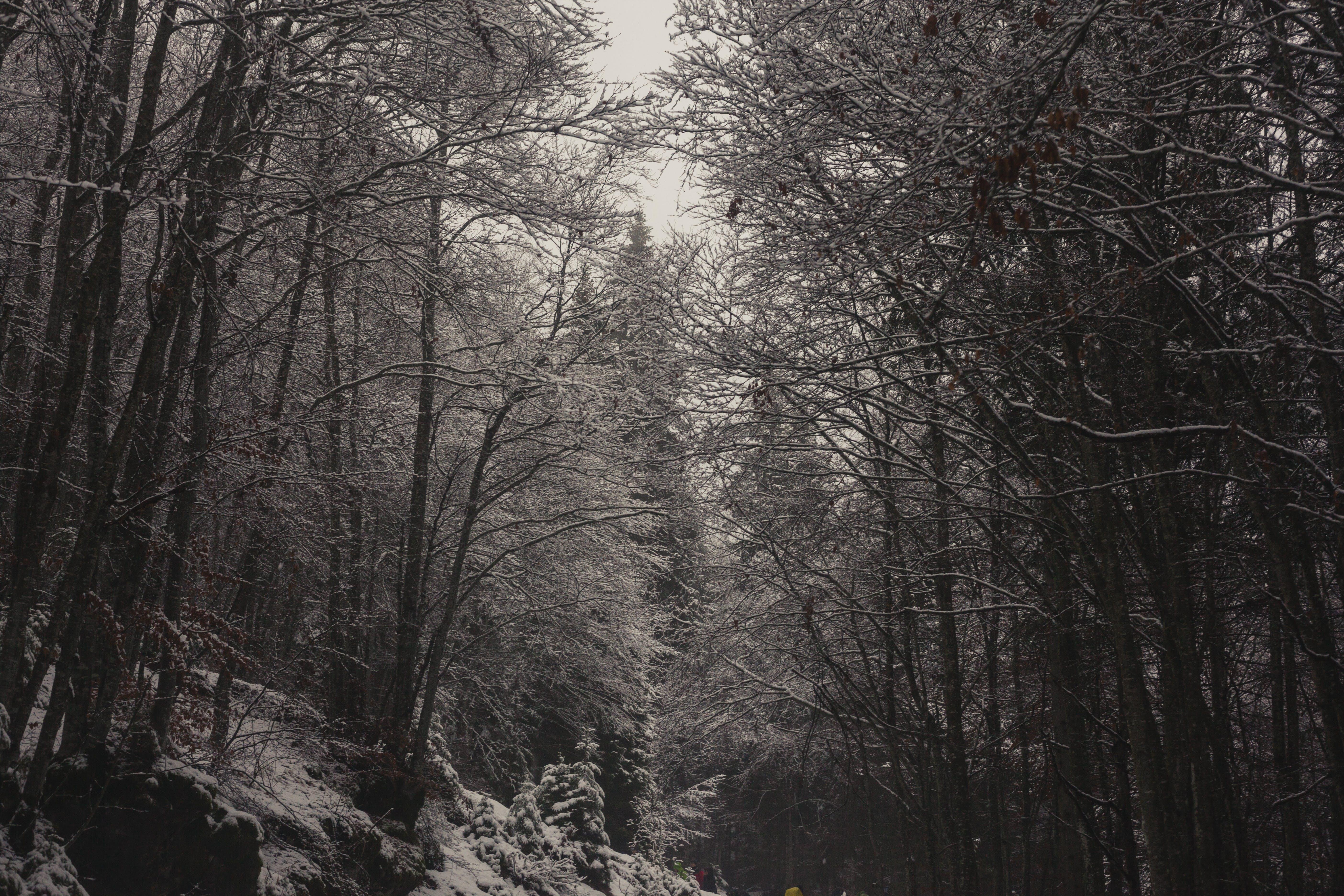 ağaç gövdeleri, ağaçlar, buz, buz tutmuş içeren Ücretsiz stok fotoğraf