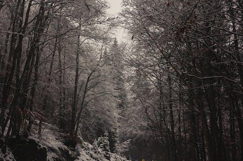 Fotos de stock gratuitas de arboles, bañador, blanco y negro, bosque