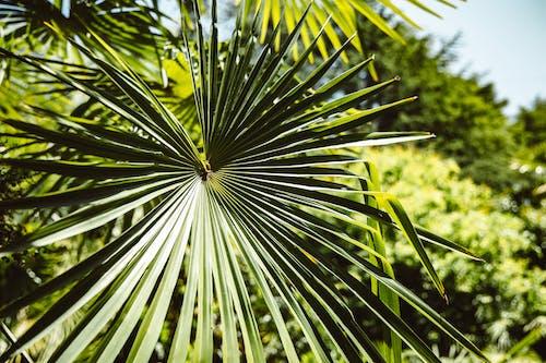 Close-Up Shot of a Palm Leaf