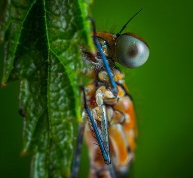 Free stock photo of insect, macro, dragonfly