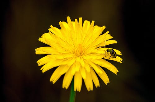 Free stock photo of beetle, depth of field, flower