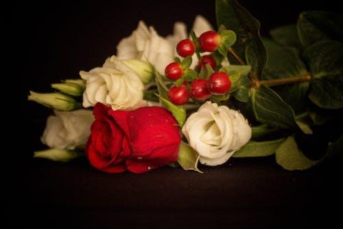 คลังภาพถ่ายฟรี ของ ขาว, ช่อดอกไม้, ดอกกุหลาบ, ดอกไม้