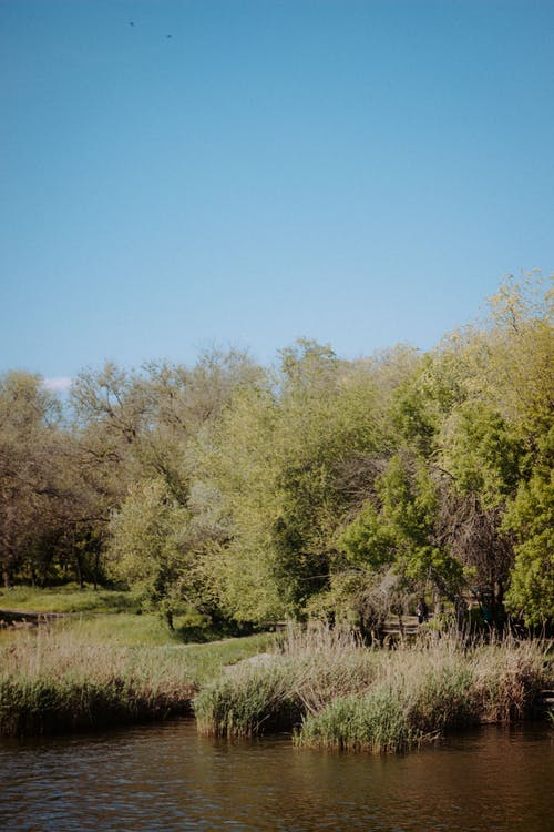 Lake near grassy shore with trees
