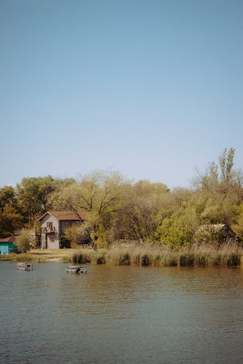 Calm lake flowing near grassy shore with tall lush trees and cabin in countryside on summer day against blue sky