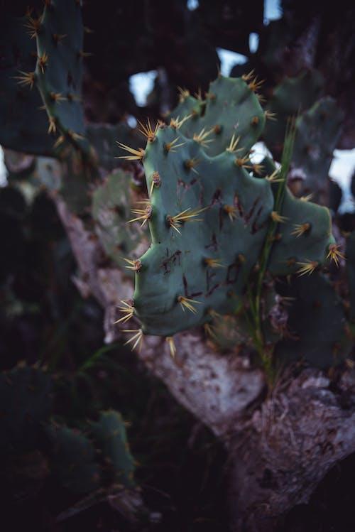 Безкоштовне стокове фото на тему «любитель природи, навколишнє середовище»