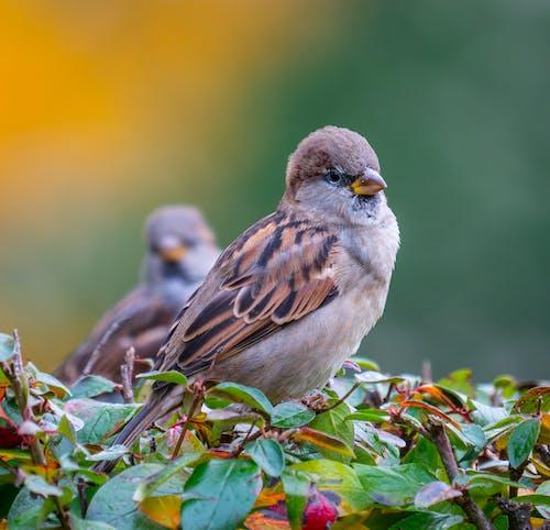 Immagine gratuita di ala, animale, becco