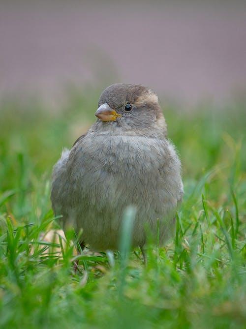 Immagine gratuita di animale, becco, birdwatching