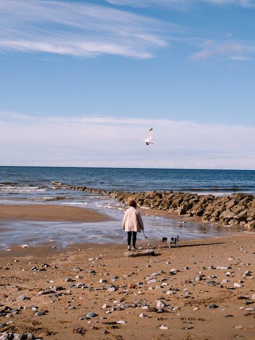 Free stock photo of beach, coast, coastal