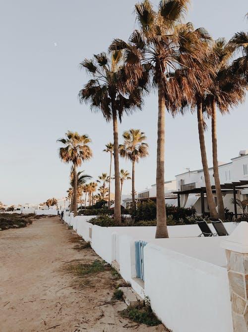 Palm Trees on White Concrete Wall