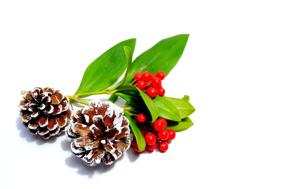 berries, christmas, festive