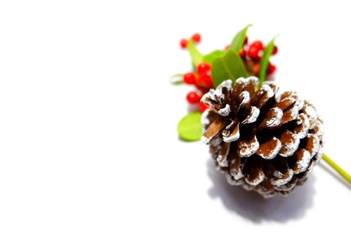 Free stock photo of berries, christmas, pine cone