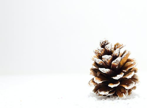 Free stock photo of christmas, pinecone, rustic, snow