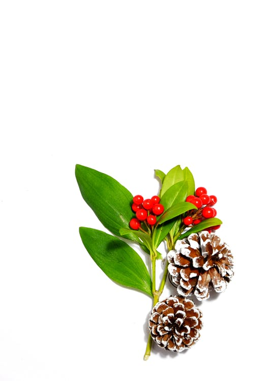 Free stock photo of berries, christmas, festive, pinecone