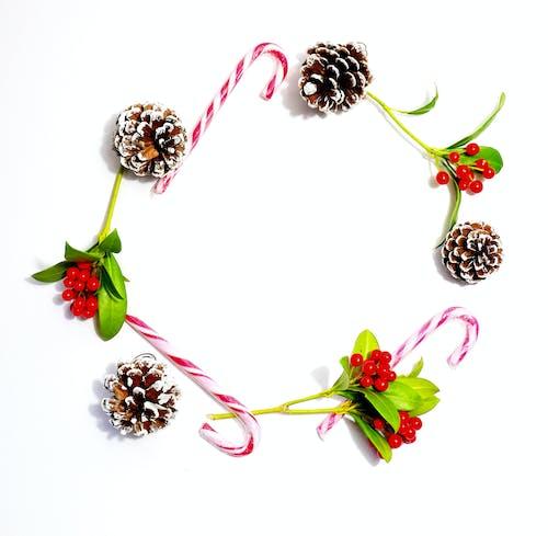Free stock photo of berries, christmas, crown