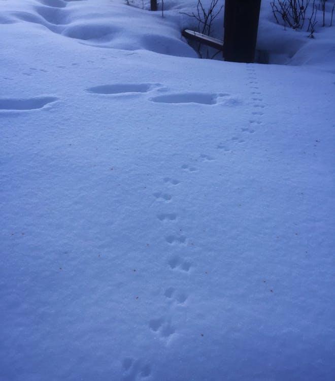 冬季, 冬季景觀, 列印