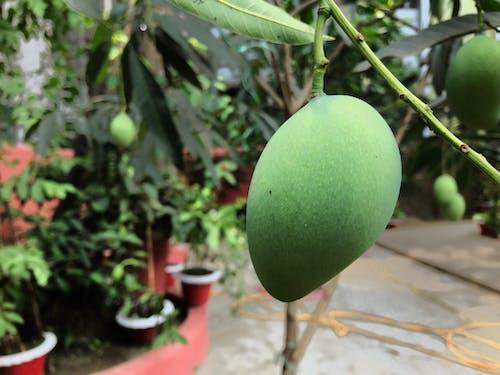 Free stock photo of bangla photography, bangladesh, green