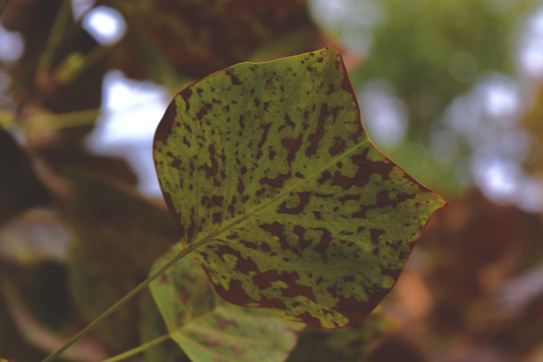 Free stock photo of leaf, autumn, cat, shape