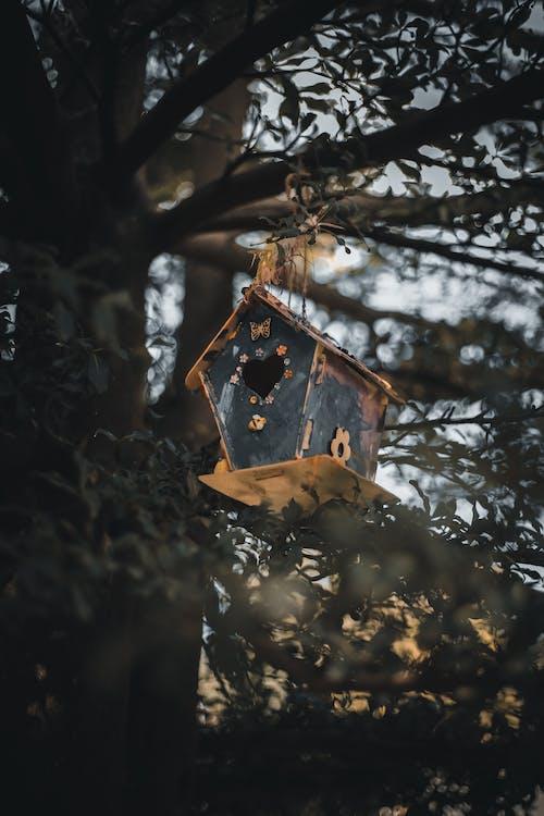 Free stock photo of bird house, bird nest, tree