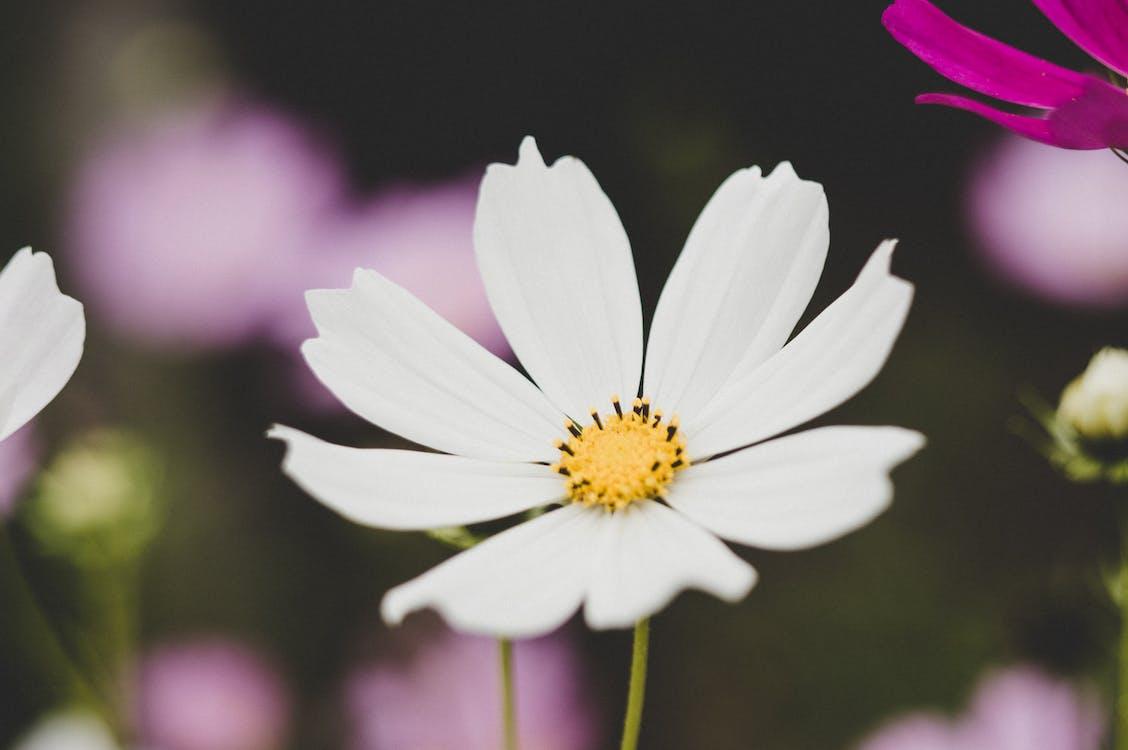 barvy, flóra, jasný