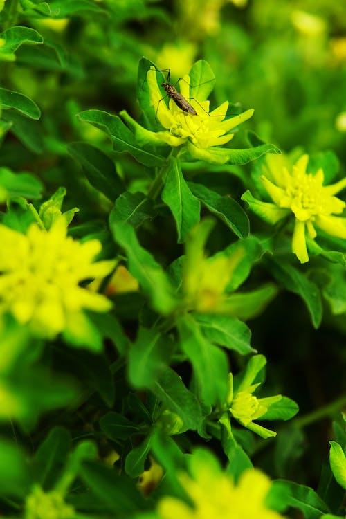 Základová fotografie zdarma na téma flowerstagram, gard, krásný