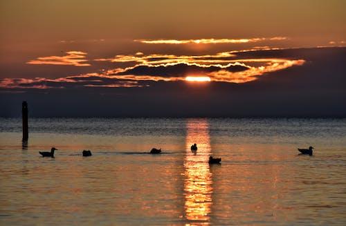 Gratis lagerfoto af baltic, dyreliv, hav, havfugl