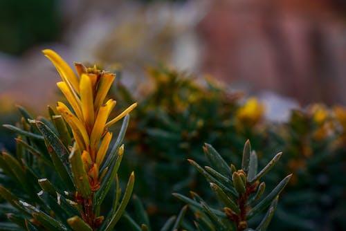 Çiçekler, doğa, gün, park içeren Ücretsiz stok fotoğraf