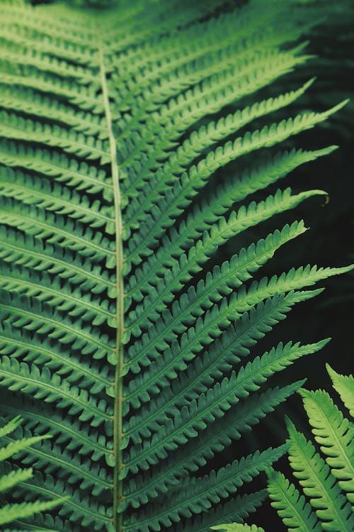 Immagine gratuita di biologia, crescita, ecologia
