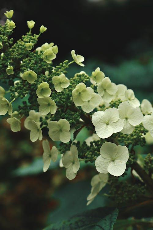 Immagine gratuita di albero, bocciolo, colore