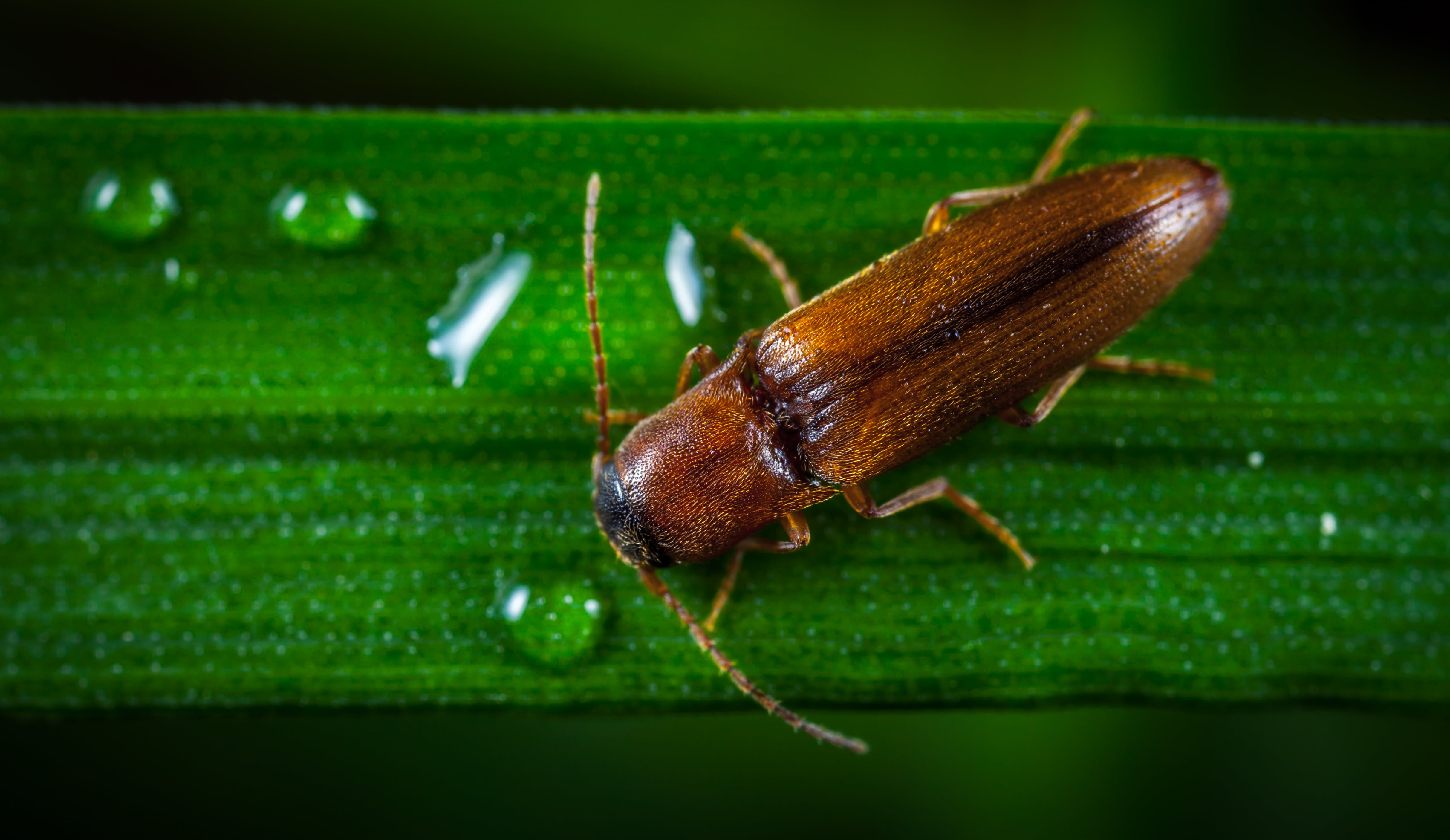 bug, insect, macro