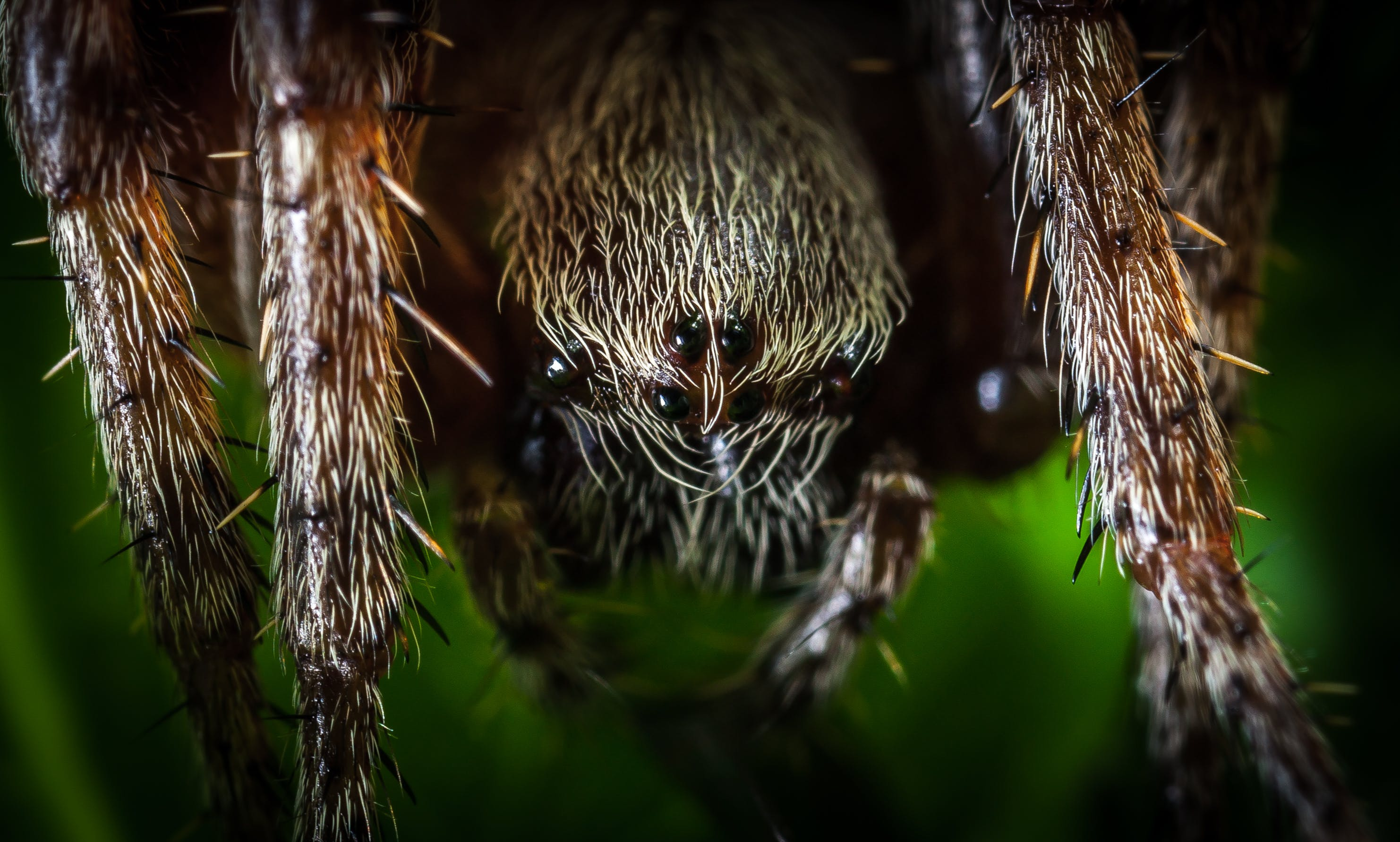 Macro Photography of Spider