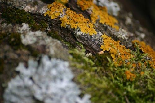 Photos gratuites de furn, lichen