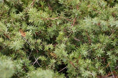 bitkibilim, büyüme, çevre, renkler içeren Ücretsiz stok fotoğraf