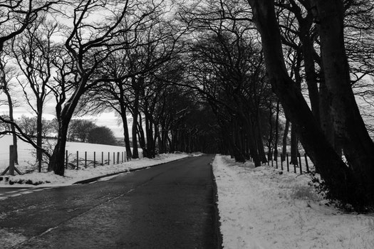Grayscale Photo of Road in Between Withered Trees
