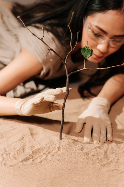 ağaç dalı, Aşk, çekici içeren Ücretsiz stok fotoğraf