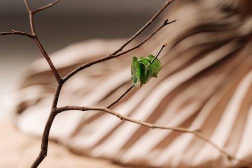 Immagine gratuita di albero, foglie, legno