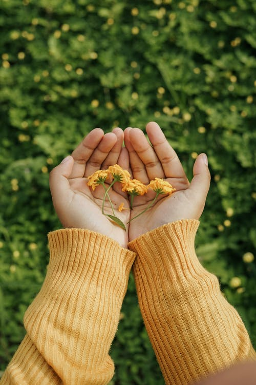 꽃, 노란색, 사람의 무료 스톡 사진