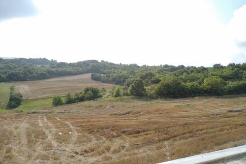 Free stock photo of arable, farmland, green trees
